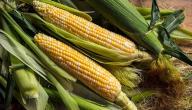 فوائد شعر الذرة لإنقاص الوزن