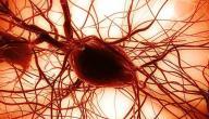 ما هي الخلايا الجذعية الجنينية