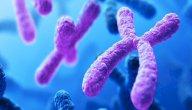 وظائف الكروموسومات في الجسم