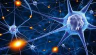 مفهوم السيالة العصبية