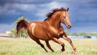 كم تبلغ سرعة الحصان القصوى