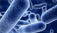 معلومات عن بكتيريا الإيكولاي