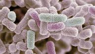 علاج بكتيريا إشريشيا كولاي