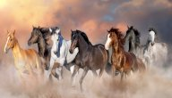 تعبير عن الحصان العربي