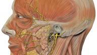 علاج التهاب عصب الأذن
