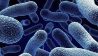 علاج جرثومة الإيكولاي بالأعشاب
