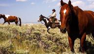 ما هي أسماء الخيول الأصيلة