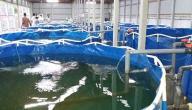 تربية الأسماك في الأحواض البلاستيكية