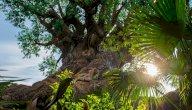 فوائد الشمس للإنسان والحيوان والنبات