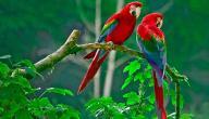 موسم تزاوج طيور الحب
