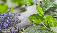 علاج متلازمة غيلان باريه بالأعشاب: حقيقة أم خرافة قد تضرك؟