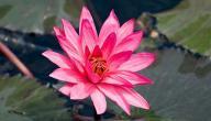 خصائص النباتات الزهرية