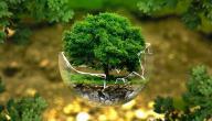 موضوع إنشاء حول البيئة