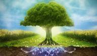 كلمة عن البيئة