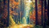 شرح قصيدة وصف الطبيعة