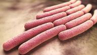 معلومات عن مرض الدزنتري
