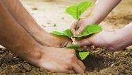 مفهوم البيئة في الإسلام
