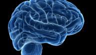 طرق تنشيط خلايا المخ
