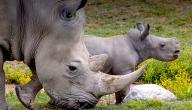 كيف تتكاثر الحيوانات الثديية