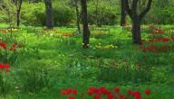 موضوع تعبير عن الربيع للصف الخامس