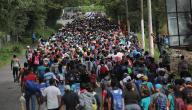 بحث عن الهجرة