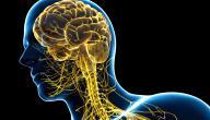 تعريف الجهاز العصبي