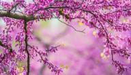 مقدمة عن فصل الربيع