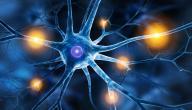 علاج الصلب المشقوق بالخلايا الجذعية