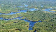 موضوع عن غابات الأمازون