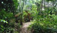 أين تقع غابات الأمازون