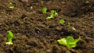 العوامل المؤثرة في تكوين التربة