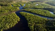 غابة الأمازون وحيواناتها