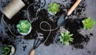 خصائص نبات الألوفيرا