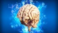 الدماغ: التعريف، الموقع، المكونات، الوظائف، الأمراض الشائعة