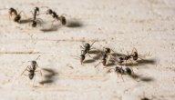 سبب ظهور النمل في البيوت