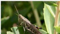 هل الحشرات تنجس الماء