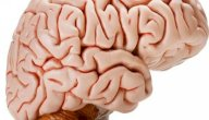 علاج ضمور القشرة الدماغية