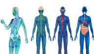 ما هو علم وظائف الأعضاء