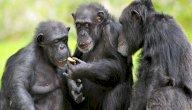 هل لدى الحيوانات لغة خاصة بهم