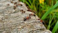ما هي دلالة وجود النمل في البيت