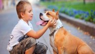 مقارنة تشريحية ووظيفية بين الغدد الدرقية للإنسان والحيوان