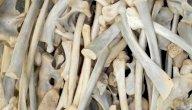 مقارنة تشريحية ووظيفية بين العظام للإنسان والحيوان