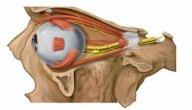 عضلات العين: عددها، أنواعها، وظائفها، الأمراض المعرضة لها