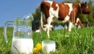 هل فكرت يومًا لم لا ينصح بإعطاء الرضيع الحليب البقري؟