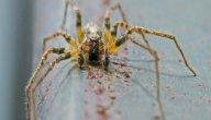 هل وجود العناكب في المنزل يجلب الفقر؟ أم هي محض خرافات لا أساس لها؟