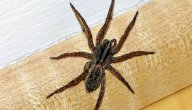 سبب ظهور العناكب في المنزل وكيف يمكن إيجاد حل جذري لذلك