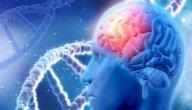 الدماغ المتوسط: التعريف، الموقع، الوظائف والأمراض الشائعة