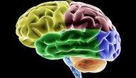 بنية الدّماغ ووظائفه النفسية