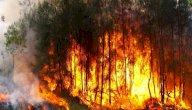 حرائق الغابات: الأسباب، الحلول والنتائج