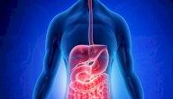 الكبد: موقعه، وظائفه، أمراضه، هل يمكن البقاء بدونه؟